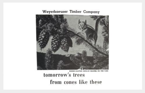 Weyerhaeuser  (1)